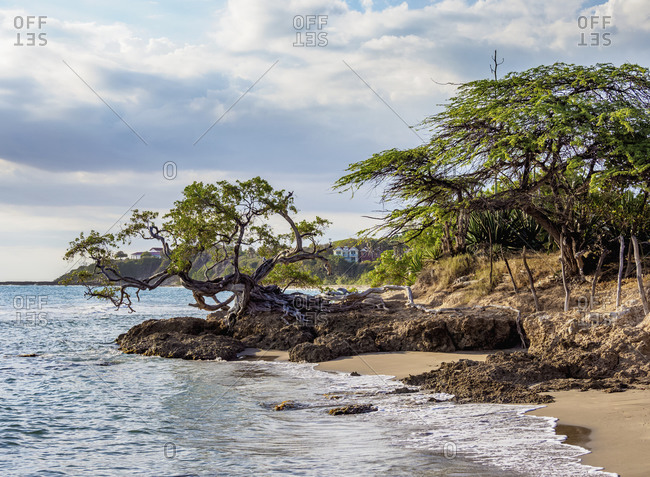 Lone Tree by the Jack Sprat Beach, Treasure Beach, Saint Elizabeth Parish, Jamaica, West Indies, Caribbean, Central America