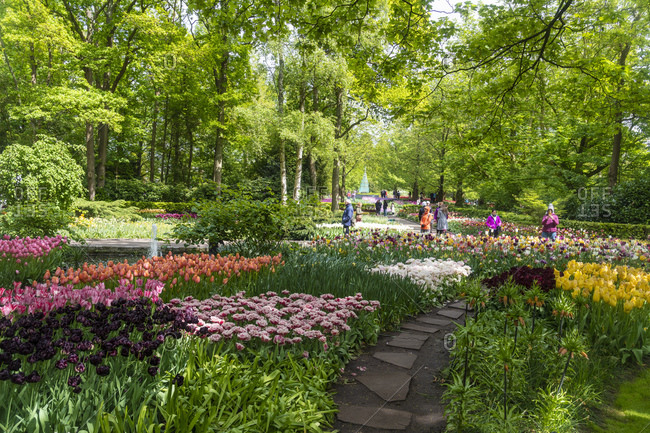 May 6, 2019: Tulip displays and flowers in Kuekenhof in Lisse, South Holland, The Netherlands, Europe