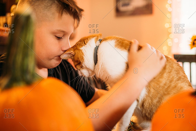 Boy petting his orange and white cat by pumpkins s Halloween decorations