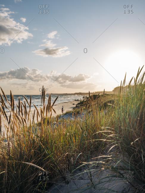 Sun setting over tall grass on beach on the coast of Sweden