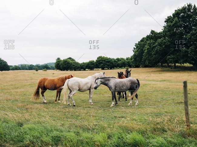 Horses in a field in rural Sweden