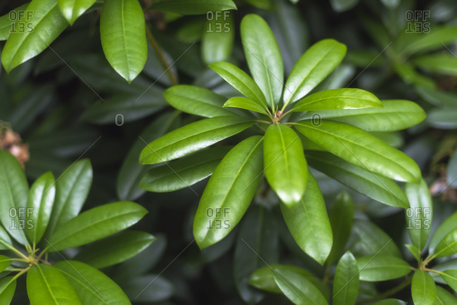 Close up of a green leafy plant growing in nature