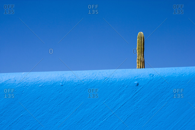 Cactus plant rising above a blue wall, and a bright blue sky