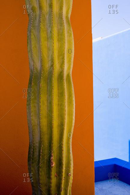 A cactus plant against an orange wall