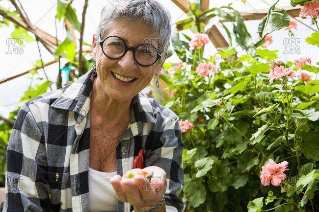 Senior woman gardening in geodesic dome, Santa Fe, NM.