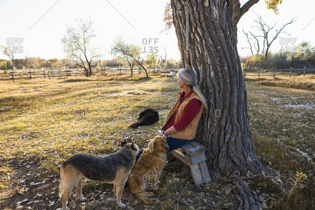Mature woman at home on her property in a rural setting sitting under a tree, with three dogs