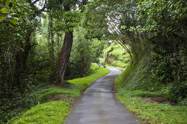 Winding narrow country road with trees and green verges