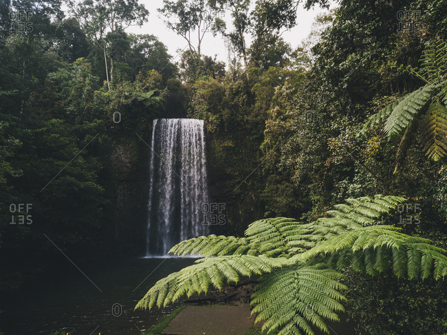 Millaa Millaa Falls surrounded by lush green forest and palm trees in foreground, Tropical Queensland, Australia.