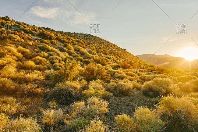 Sunset over shrubs near Mono Lake in Northern California.