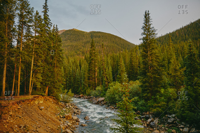 Golden sunset over river bank surrounded by pines near Aspen, Colorado