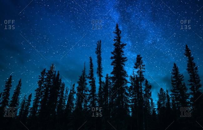 Silhouette Pine Forest Under Milky Way Galaxy And Stars