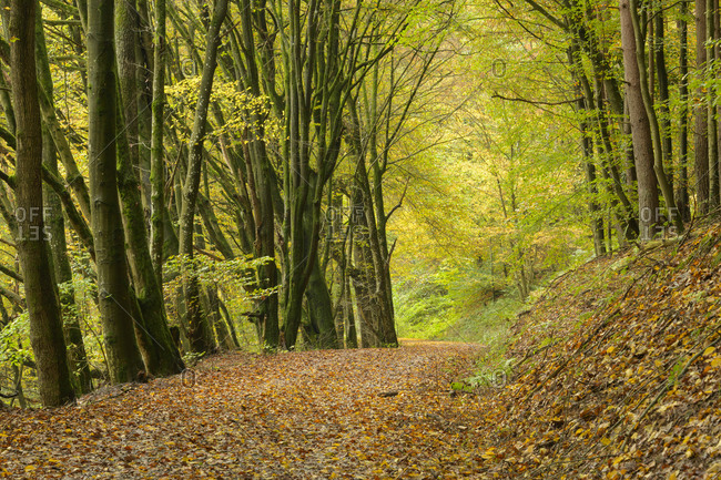 Forest path in autumn, Spessart, Bavaria, Germany