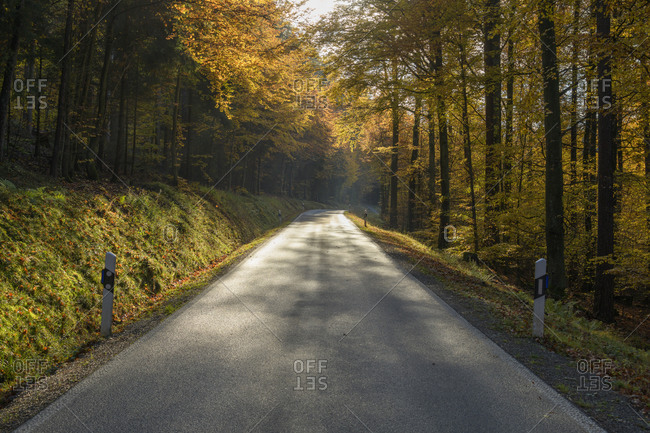 Road in autumnal forest, Anorbach, Odenwald, Bavaria, Germany