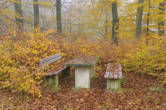 Seat group in autumn forest, Spessart, Bavaria, Germany