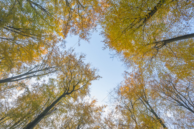 View in autumnal treetops, Spessart, Bavaria, Germany