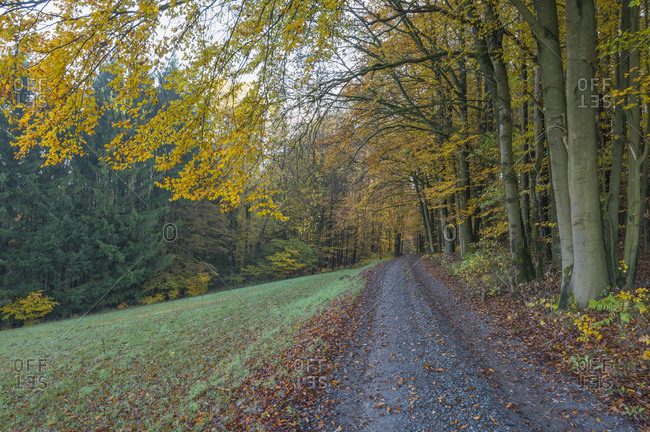 Footpath on the edge of the forest in autumn, Spessart, Bavaria, Germany