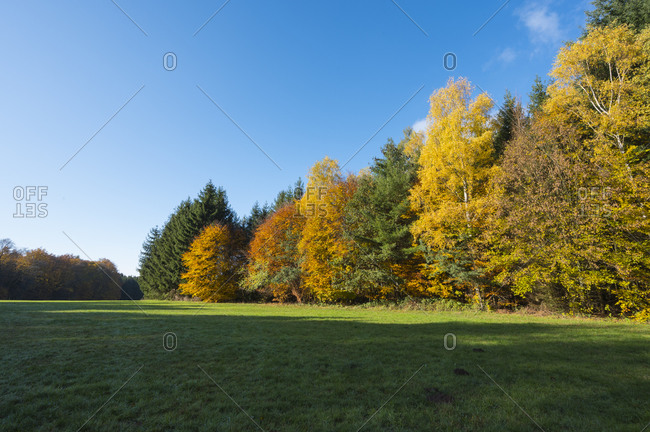Landscape with clearing in autumn, Spessart, Bavaria, Germany