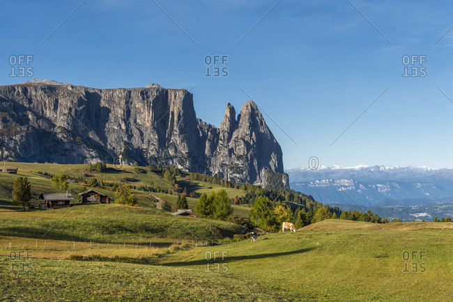 Alpe di Siusi, Castelrotto, South Tyrol, Bolzano province, Italy, Europe. Autumn on the Alpe di Siusi with a view of the Schlern