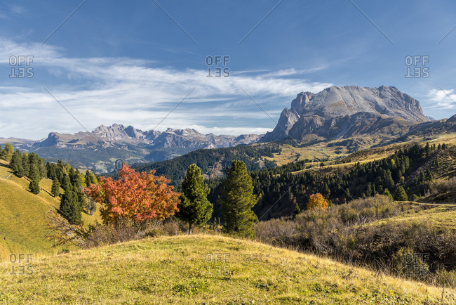 Alpe di Siusi, Castelrotto, South Tyrol, Bolzano province, Italy, Europe. Autumn on the Alpe di Siusi with a view of the Sassolungo massif and the Odle peaks