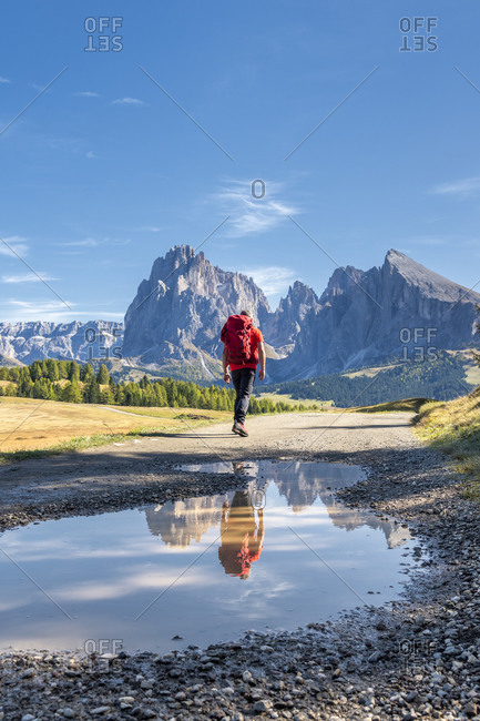 October 11, 2019: Alpe di Siusi, Castelrotto, South Tyrol, Bolzano province, Italy, Europe. A hiker en route to the Alpe di Siusi with a view of the Sassolungo range