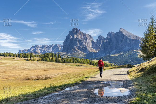 Alpe di Siusi, Castelrotto, South Tyrol, Bolzano province, Italy, Europe. A hiker en route to the Alpe di Siusi with a view of the Sassolungo range