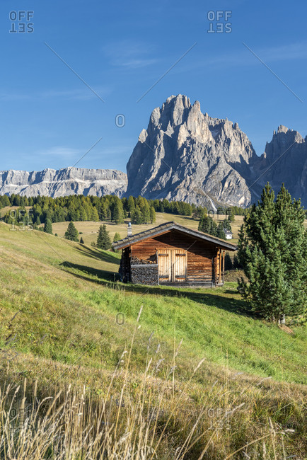 Alpe di Siusi, Castelrotto, South Tyrol, Bolzano province, Italy, Europe. On the Alpe di Siusi with a view of the Sassolungo massif