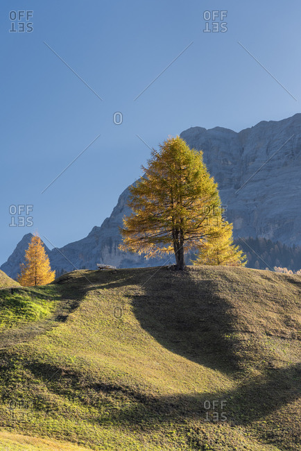 Hochabtei, Alta Badia, Bolzano province, South Tyrol, Italy, Europe. Autumn on the Armentara meadows, in the background the Zehnerspitze