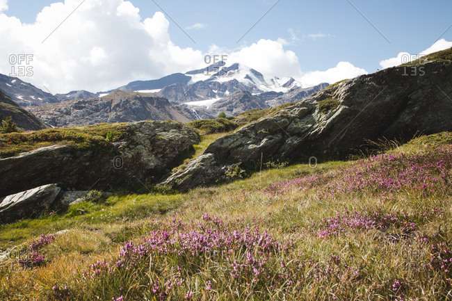 Italy, South Tyrol, mountain meadow, snow-capped mountains