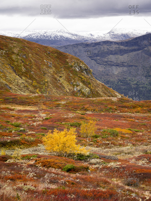 View of landscape in Autumnal tundra, Sognefjell, Norway
