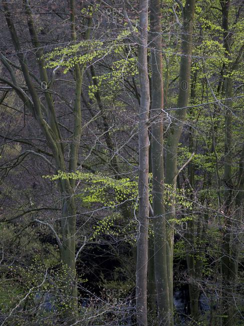 View of landscape in Reinhardswald Nature Park, Hesse