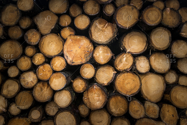 Sawn logs from trees in Wales