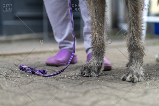 An Irish wolfhound and owner's feet