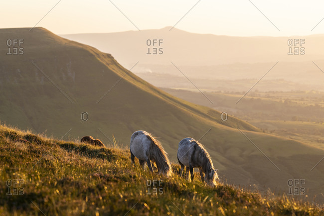 Horses grazing on the hillside in rural Great Britain