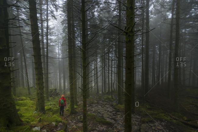Woman walking in Beddgelert forest in Snowdonia in Wales