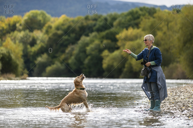 A woman throws a stone for her Golden Retriever dog which leaps and jumps in a  spray of water to catch it in a river