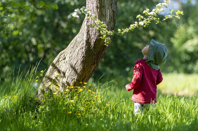 A toddler finds some Buttercups at the base of a tree in a woodland during summer