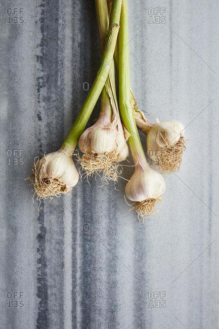 Top of view fresh garlic