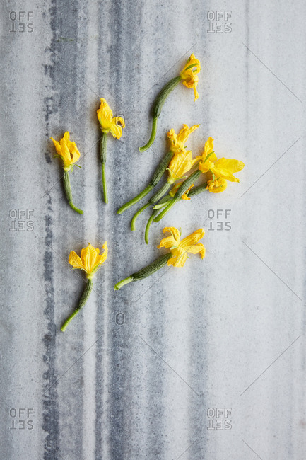 Cucumber flowers on a marble surface