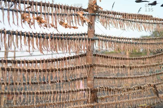 Drying fish on a rack in Udvada, India