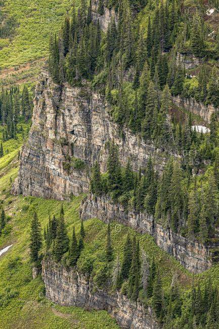 Trees on steep mountain slope, Logan Pass, Glacier National Park, Montana.