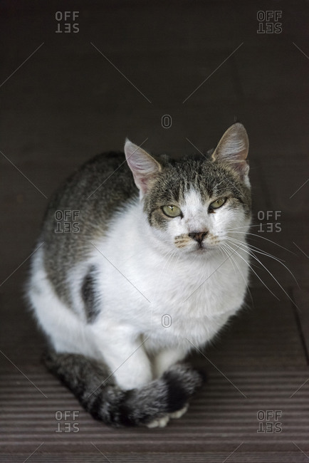 A cat, Mostar, Bosnia and Herzegovina