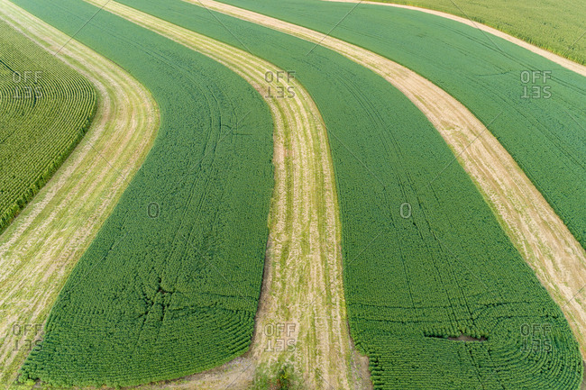 Terraced soybean field, Marion County, Illinois.