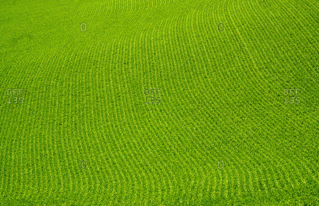 USA, Washington State, Palouse. Green field.