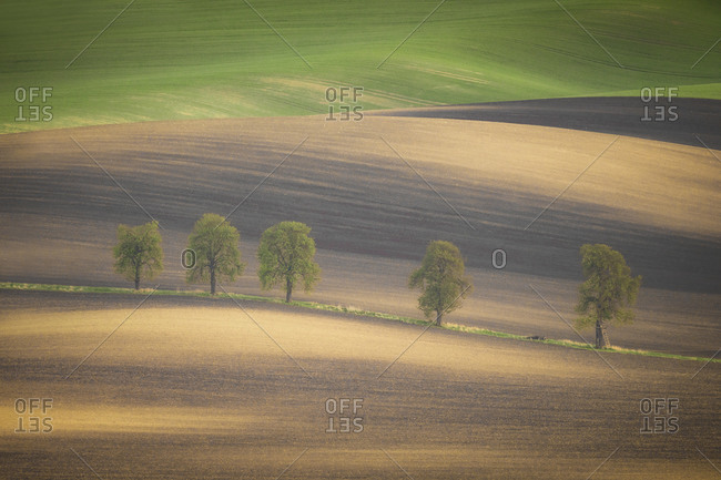 Europe, Czech Republic, Moravia. Row of chestnut trees and rolling hills.
