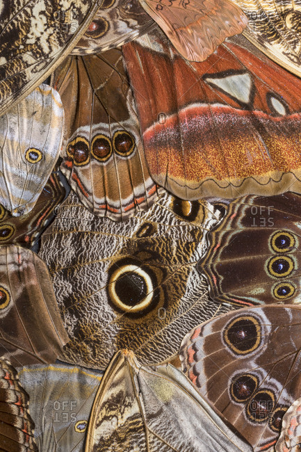 Close-up pattern in butterfly wings.