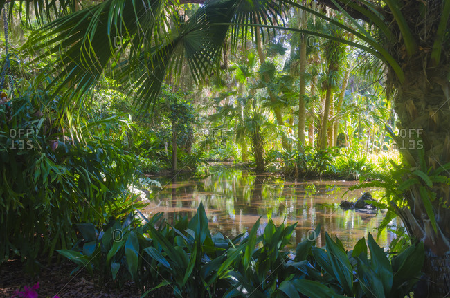 USA, Florida. Washington Oaks Gardens State Park
