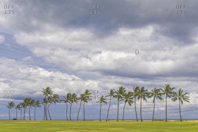 Palm trees along coast, Maui, Hawaii.