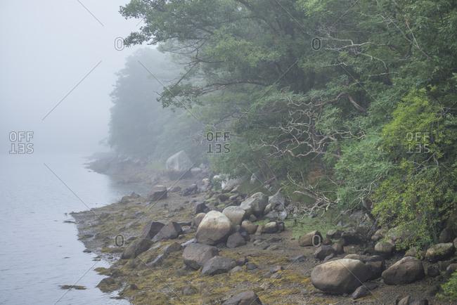 USA, Massachusetts, Cape Ann, Gloucester. Lobster Cove in fog