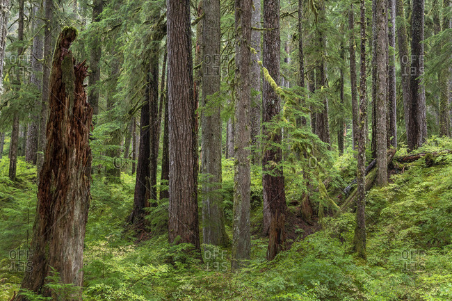 USA, Washington State, Olympic National Park. Forest scenic.