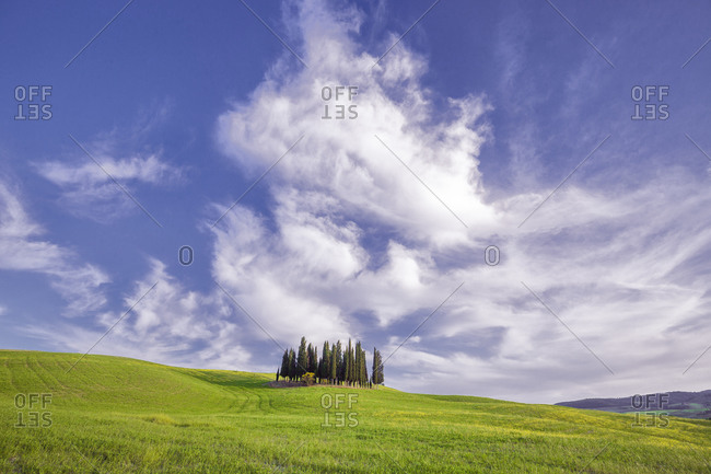 May 19, 2015: Europe, Italy, Tuscany, Val d' Orcia. Cypress grove in landscape.